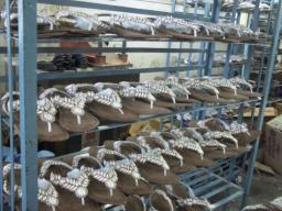 case 361 pic 3 impactiva footwear qa